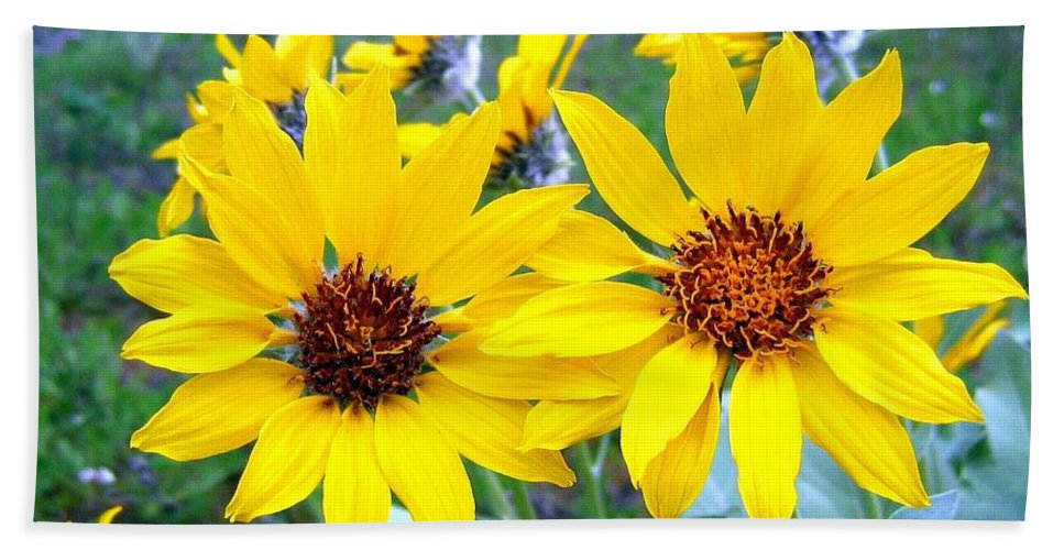 Sunflowers Hand Towel featuring the photograph Stunning Wild Sunflowers by Will Borden