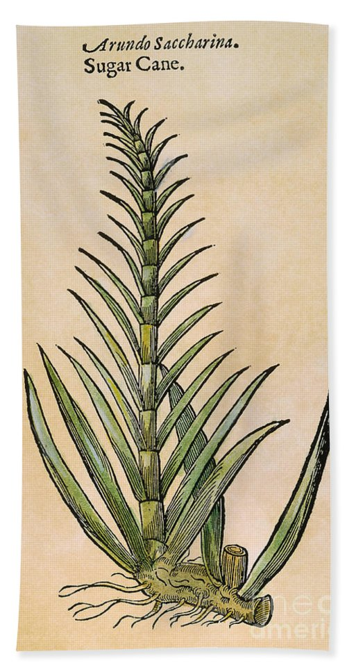 1597 Hand Towel featuring the photograph Sugar Cane, 1597 by Granger