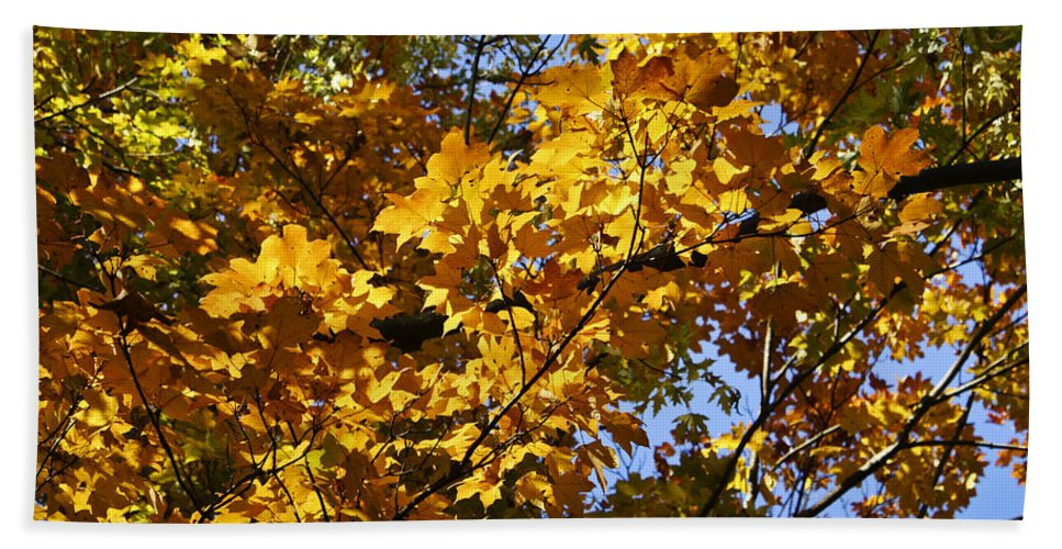 Sugar Bath Towel featuring the photograph Sugar Maple by Teresa Mucha