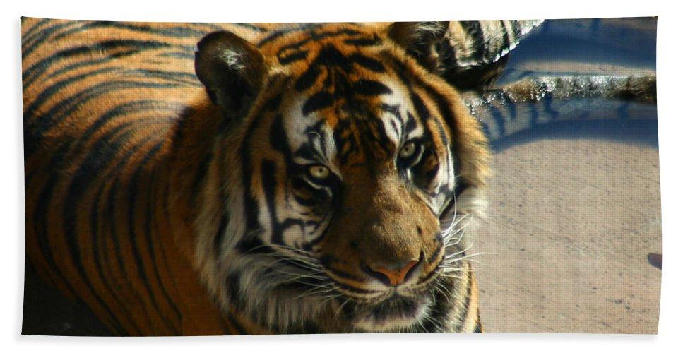 Tiger Bath Sheet featuring the photograph Sumatran Tiger by Anthony Jones