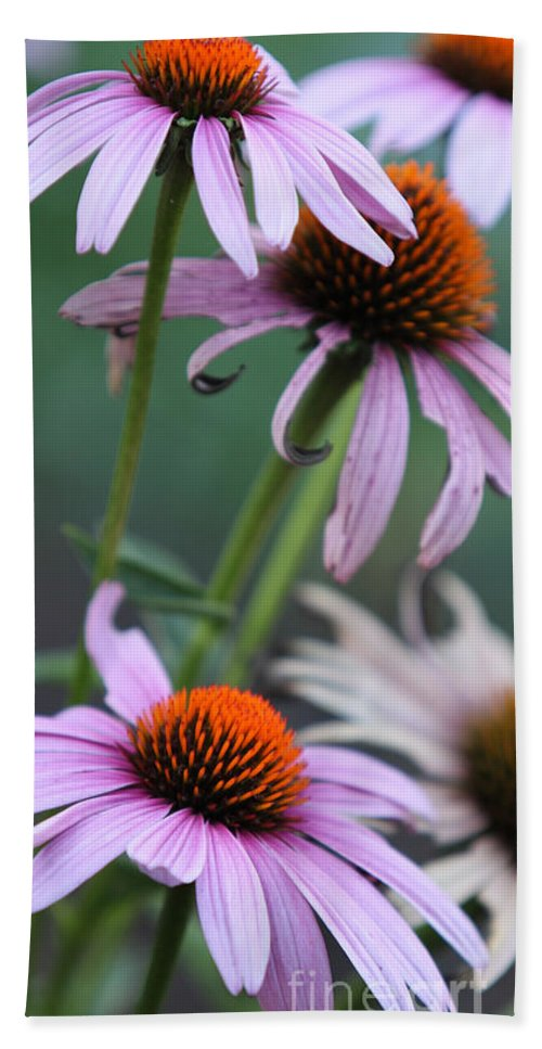 Echinacea Hand Towel featuring the photograph Summer by Amanda Barcon