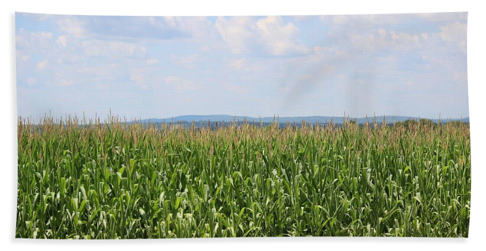 Corn Hand Towel featuring the photograph Summer Corn And Blue Skies In Maine by Colleen Snow