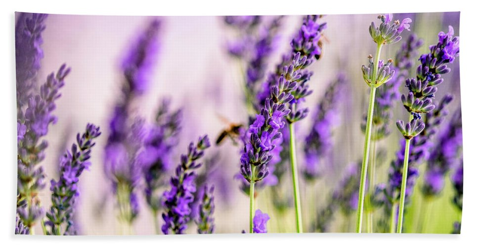 Lavender Bath Towel featuring the photograph Summer Lavender by Nailia Schwarz