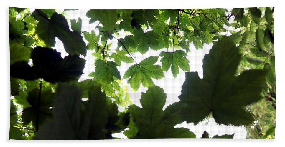 Summer. Leaves. Garden. Spring. Trees. Landscape. Countryside. Flora. Flowers Bath Sheet featuring the photograph Summer Xxii by Nicholas Rainsford