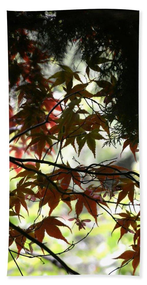 Summer. Leaves. Landscape. Countryside. Spring. Trees. Flowers. Flora. Garden. Plants. Bath Sheet featuring the photograph Summer Xxvii by Nicholas Rainsford