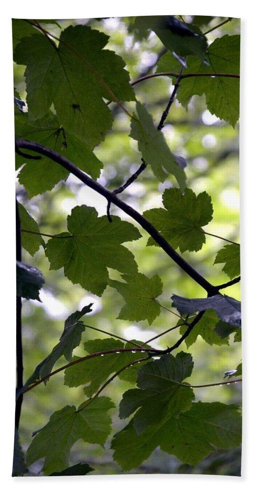 Summer. Leaves. Landscape. Flora. Tree. Garden. Flowers. Plants. Countryside. Spring. Trees. Bath Sheet featuring the photograph Summer Xxxv by Nicholas Rainsford