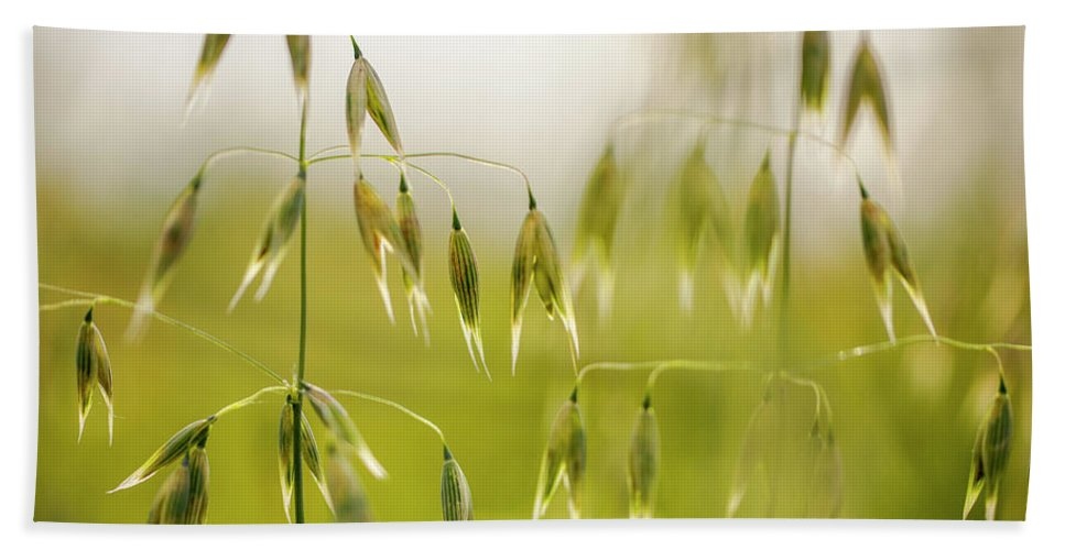 Oat Hand Towel featuring the photograph Summer Oat by Nailia Schwarz