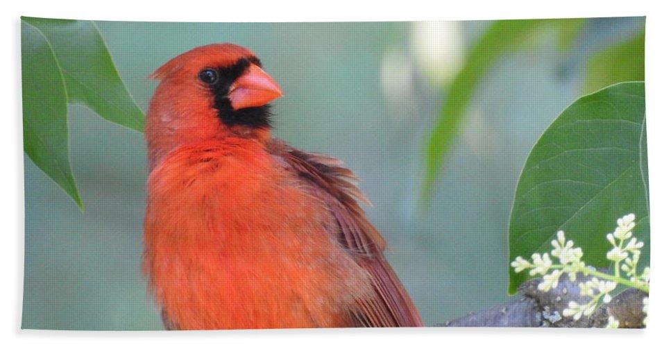 Cardinal Bath Sheet featuring the photograph Summer Perch by Betty-Anne McDonald