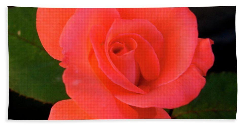 Floral Bath Sheet featuring the photograph Summer Rose by George Strout