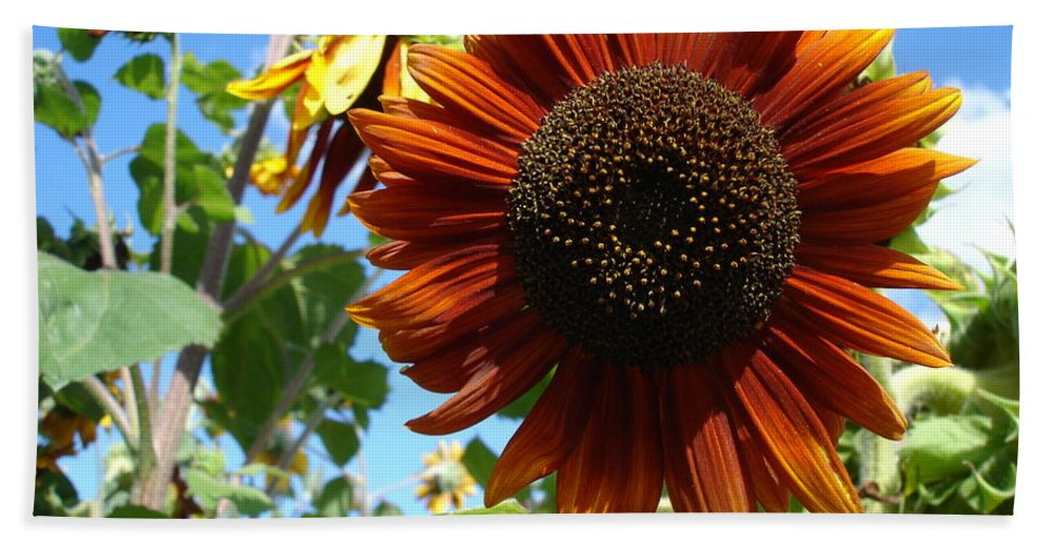 Sunflower Bath Sheet featuring the photograph Summers Here by Susan Baker