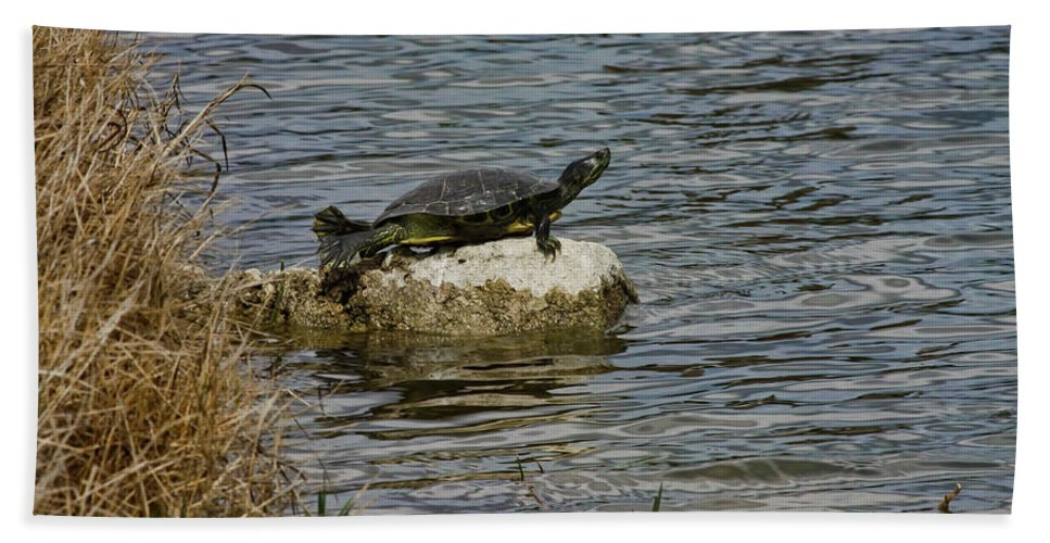 Turtle Bath Sheet featuring the photograph Sun Bathing Stone by Deborah Benoit