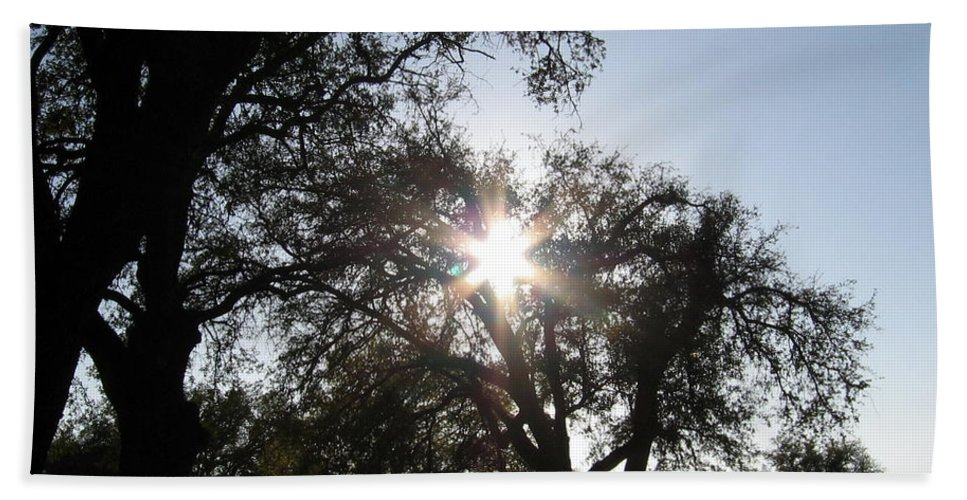 Tree Hand Towel featuring the photograph Sun Burst by Amy Hosp