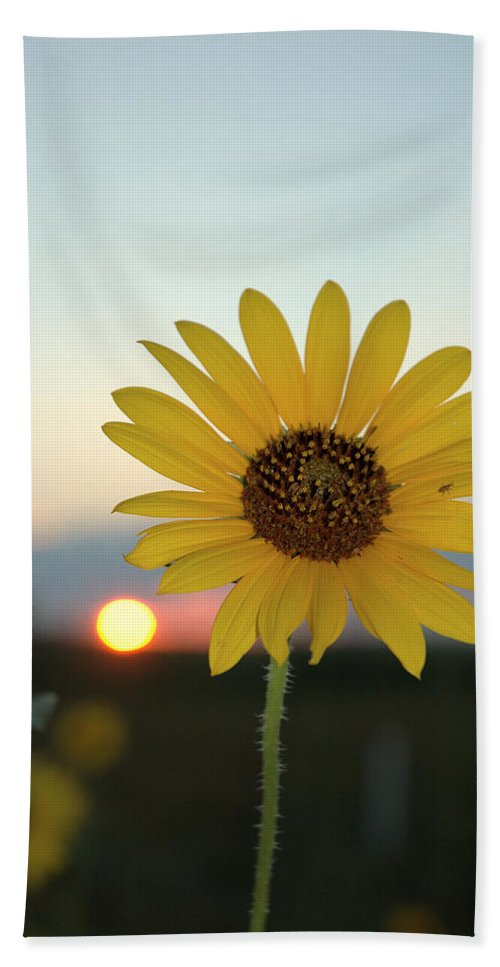 Sunset Bath Sheet featuring the photograph Sun Flower At Sunset by Jerry McElroy