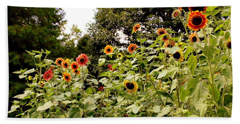 Sun Flowers Hand Towel featuring the photograph Sun Flowers Of Chanticleer by Deborah Crew-Johnson