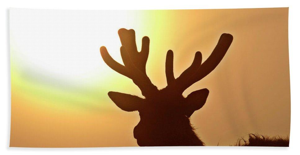 Elk Hand Towel featuring the digital art Sun Glaring Over A Bull Elk by Mark Duffy