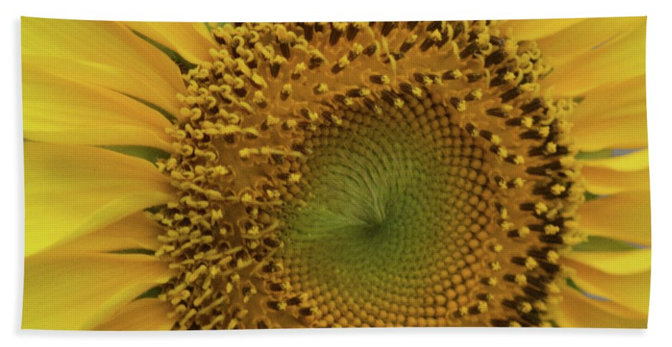 Sunflower Bath Sheet featuring the photograph Sun Of Flowers by Brandy Stinchcomb