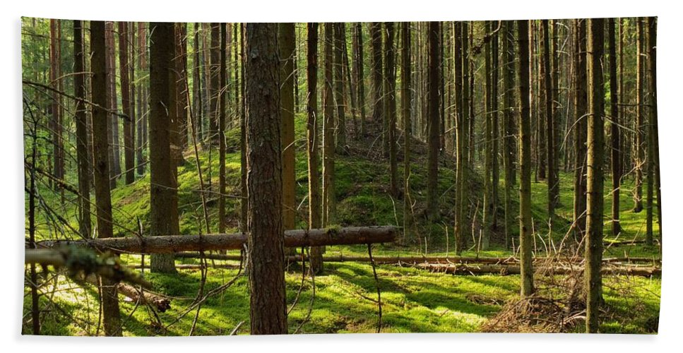 Ancient Bath Sheet featuring the photograph Sun Rays In Forest by Vadzim Kandratsenkau