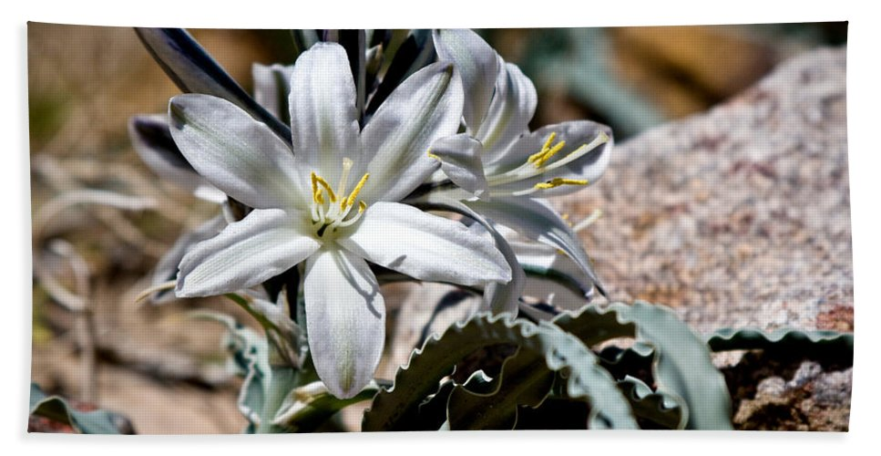 Desert Lily Hand Towel featuring the photograph Sun Soaked Desert Lily by Chris Brannen