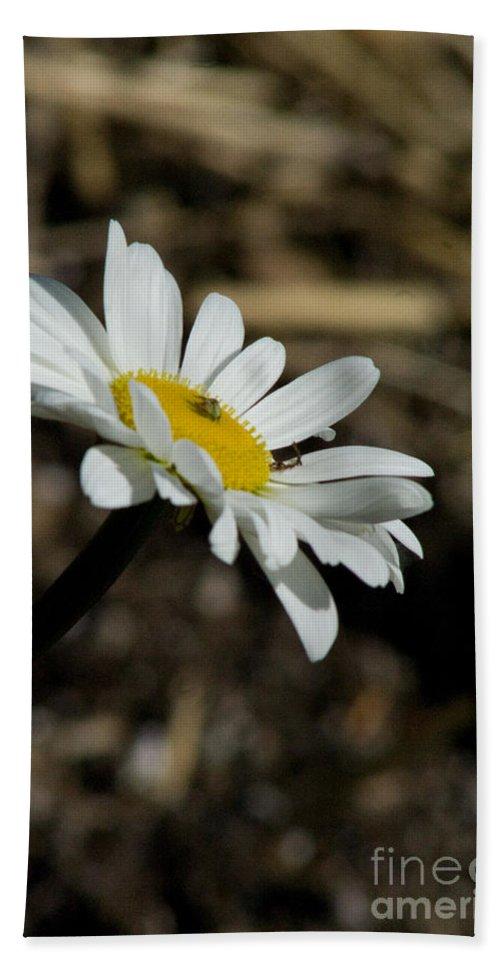 Flower Hand Towel featuring the photograph Sunbathing On A Daisy by Martha Johnson