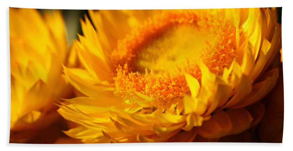 Strawflower Bath Sheet featuring the photograph Sunburn by Connie Handscomb