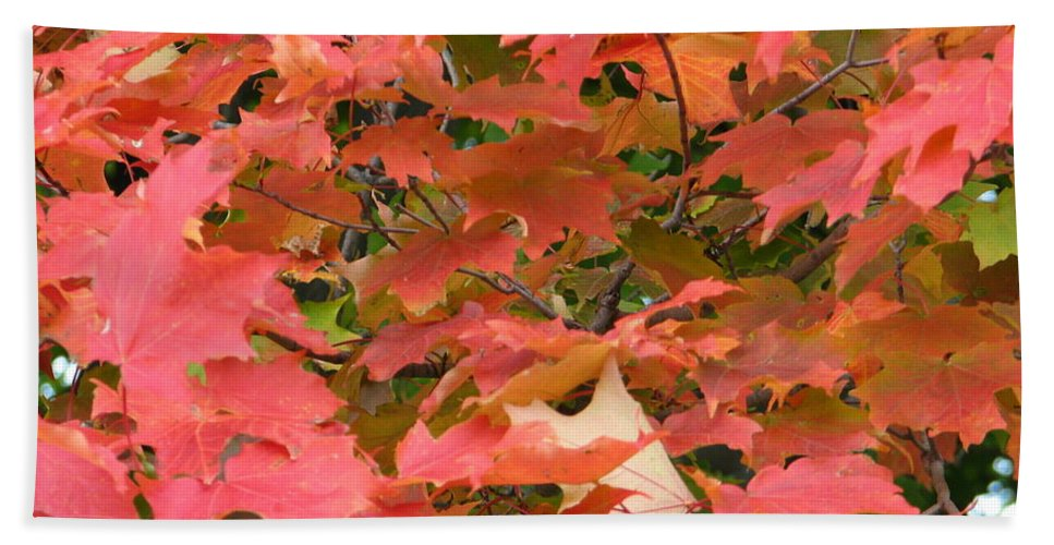 Leaves Hand Towel featuring the photograph Sunburst by Kelly Mezzapelle
