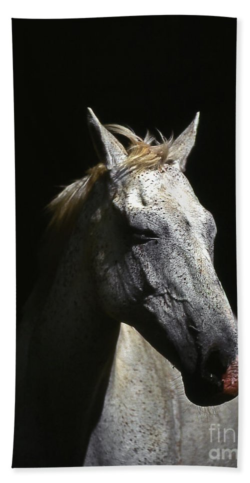 Horse Hand Towel featuring the photograph Sundance by Jim Cazel