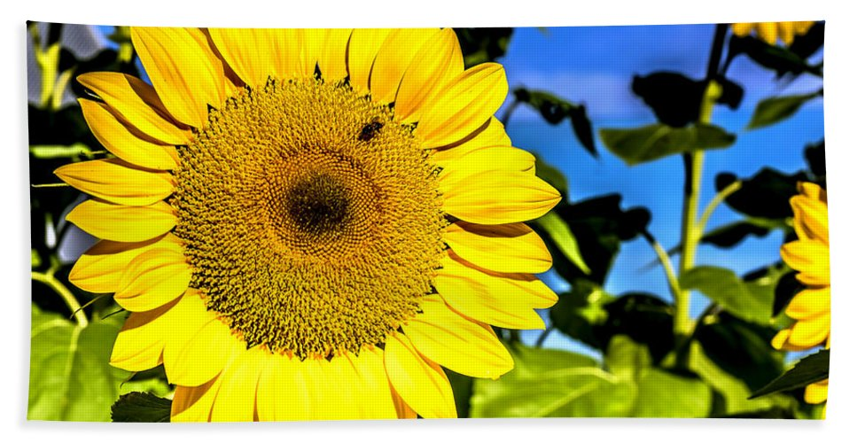 Abstract Bath Sheet featuring the photograph Sunflower 2 by Jijo George
