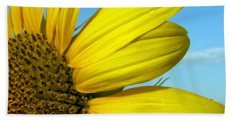 Sunflowers Bath Towel featuring the photograph Sunflower by Amanda Barcon