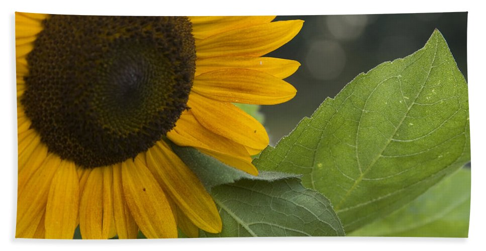 Flower Nature Farm Yellow Bright Sunflower Green Leaf Leaves Close Garden Organic Happy Bath Towel featuring the photograph Sunflower by Andrei Shliakhau