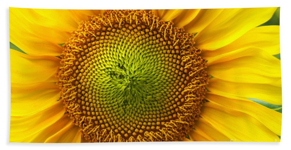 Sunflower Hand Towel featuring the photograph Sunflower  by Benanne Stiens