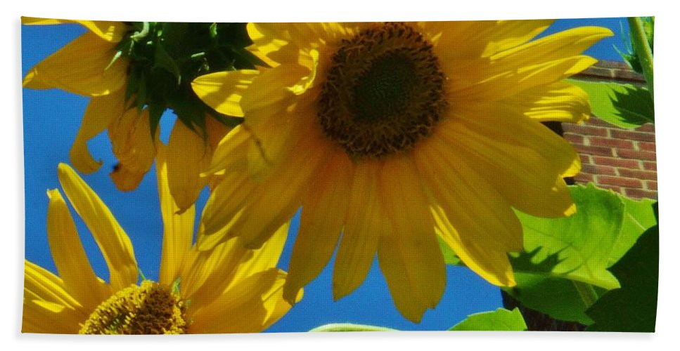 Sunflower Hand Towel featuring the photograph Sunflower by Beth Deitrick