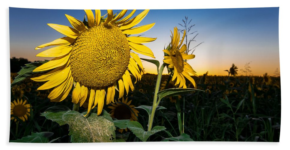 Nature Hand Towel featuring the photograph Sunflower Evening by Robert Frederick