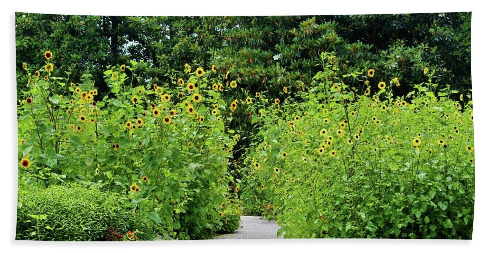 Sunflower Bath Sheet featuring the photograph Sunflower Garden by Cynthia Guinn
