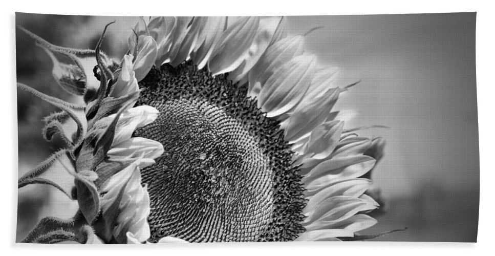 Sunflower Bath Sheet featuring the photograph Sunflower In Black And White by Smilin Eyes Treasures