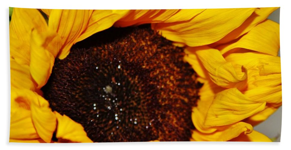 Sunflower In The Sun Bath Sheet featuring the photograph Sunflower In The Sun by Lori Mahaffey