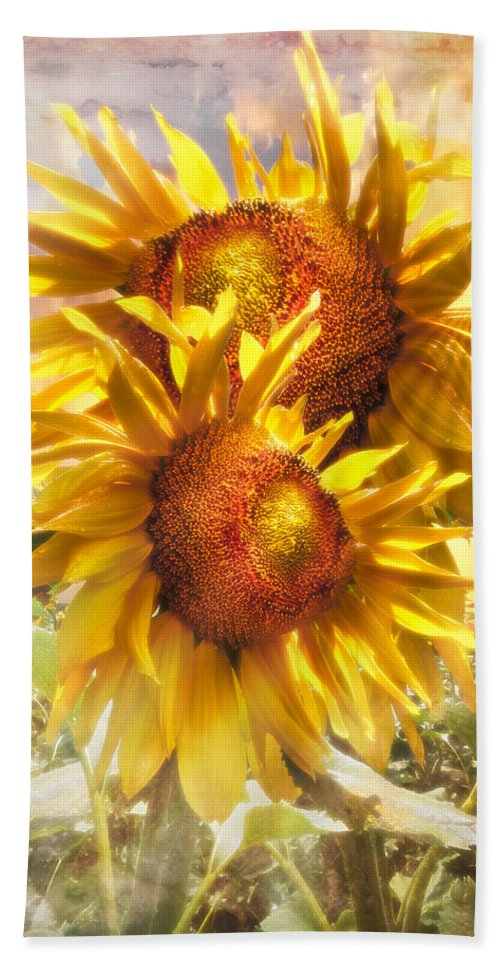 Appalachia Bath Sheet featuring the photograph Sunflower Light by Debra and Dave Vanderlaan