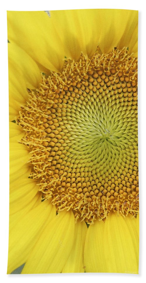 Sunflower Bath Sheet featuring the photograph Sunflower by Margie Wildblood
