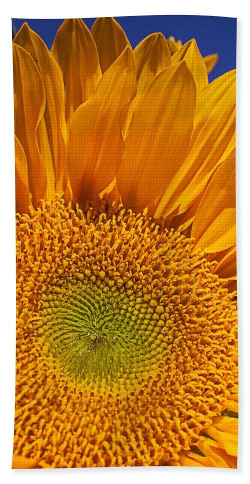 Sunflower Hand Towel featuring the photograph Sunflower Petals by Garry Gay