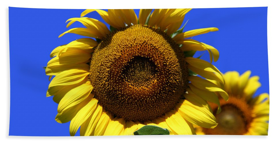 Sunflowers Bath Sheet featuring the photograph Sunflower Series 09 by Amanda Barcon
