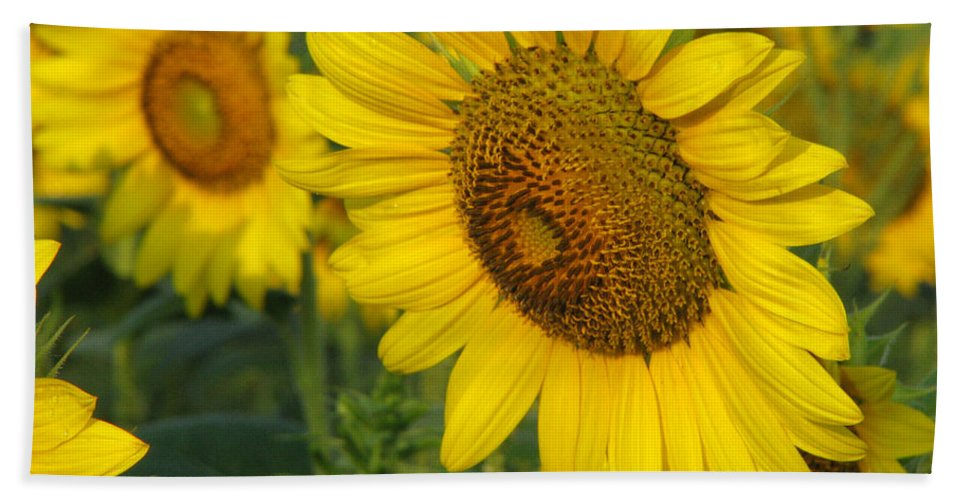 Sunflowers Bath Towel featuring the photograph Sunflower Series by Amanda Barcon