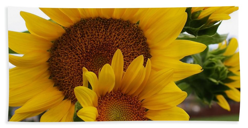 Flora Hand Towel featuring the photograph Sunflower Show by Bruce Bley
