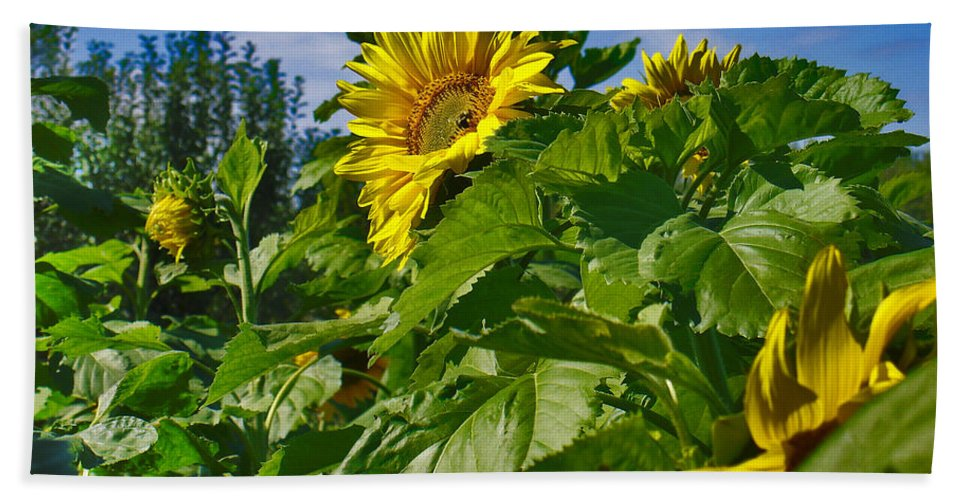 Flowers Hand Towel featuring the photograph Sunflower by Steve Karol