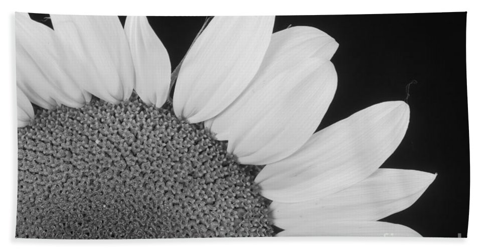 Sunflowers Bath Sheet featuring the photograph Sunflower Three Quarter by James BO Insogna