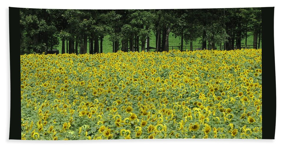Flowers Bath Sheet featuring the photograph Sunflowers 3 by Sandra Bourret
