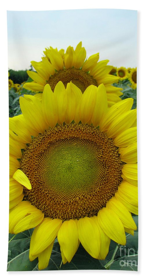 Sunflowers Bath Towel featuring the photograph Sunflowers by Amanda Barcon