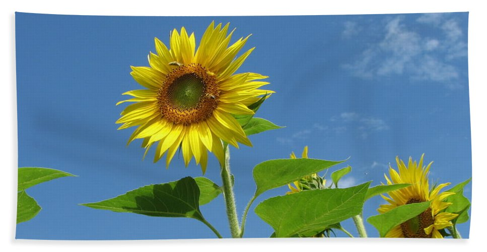 Flowers Bath Sheet featuring the photograph Sunflowers by Sandra Bourret