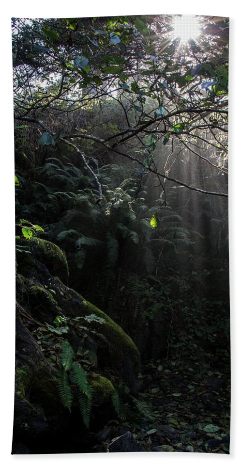 Glen Bath Sheet featuring the photograph Sunlight Falling Into Glen With Bright Leaves, Vertical by Beth Partin