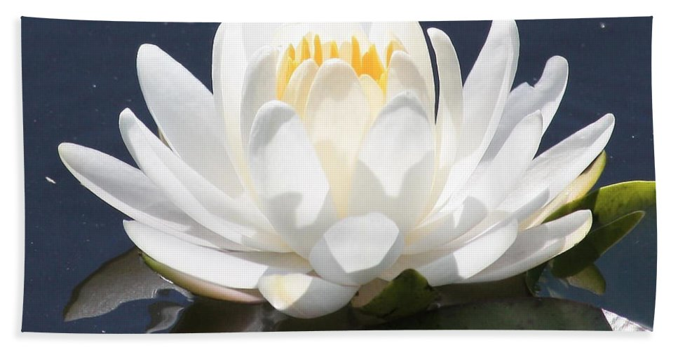 Flower Hand Towel featuring the photograph Sunlight On Water Lily by Carol Groenen