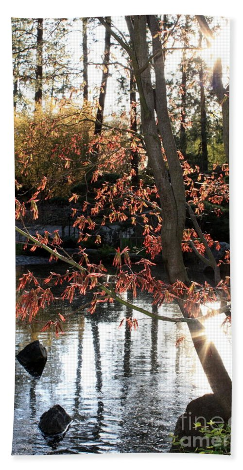 Maple Tree Hand Towel featuring the photograph Sunlight Through Japanese Maple by Carol Groenen