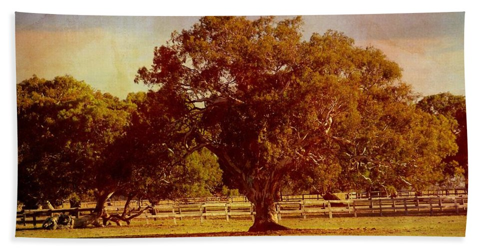 Trees Bath Sheet featuring the photograph Sunlit Landscape by Georgiana Romanovna
